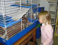 peeking at the guinea pig